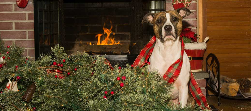 Christmas-dog-destroys-tree-slider-size