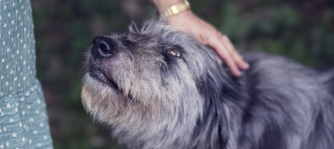 Prepare Your Dog (and Yourself) for a Trip to the Groomer