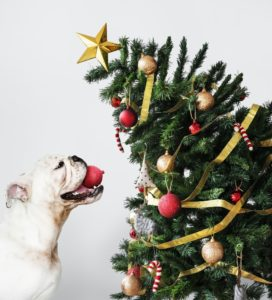 Handle the Holidays — and the Stress!