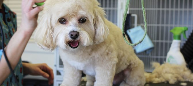 Pet Grooming: More Than Just a Pretty Coat